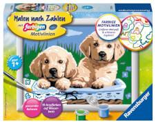Ravensburger 278398 Malen nach Zahlen: Süße Hundewelpen